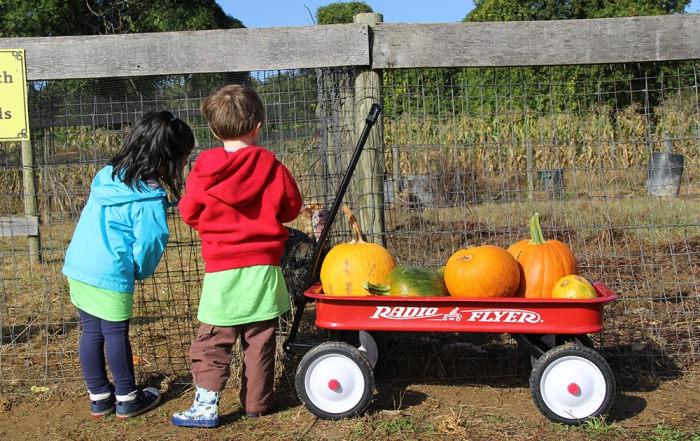 School Field Trip to Rodgers' Farms